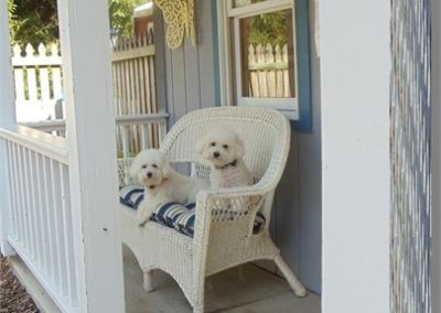 Bichons on Porch
